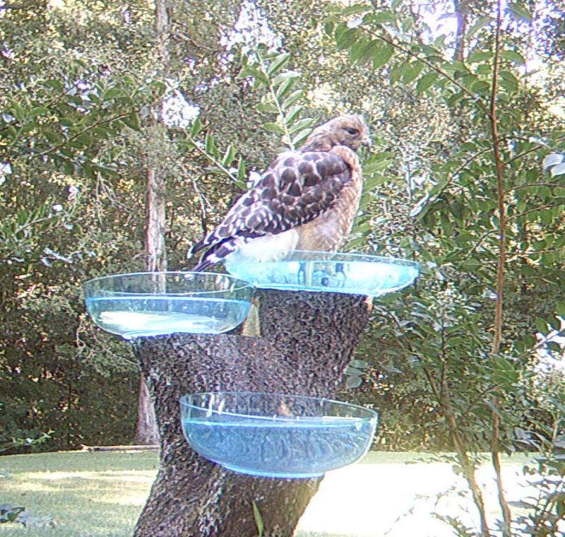 Need a Bigger Bird Bath title=