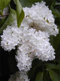 Του φυτού την εποχή του πάσχα, τον