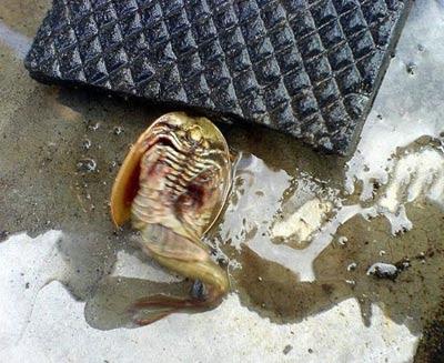 Weird Creatures Found In Chelyabinsk