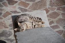 Mirko, il Gatto