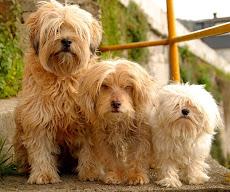 Rufo,Ron y Govi.