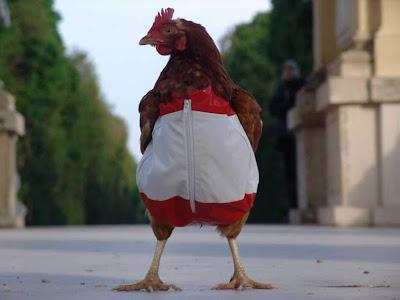Chicken in clothes