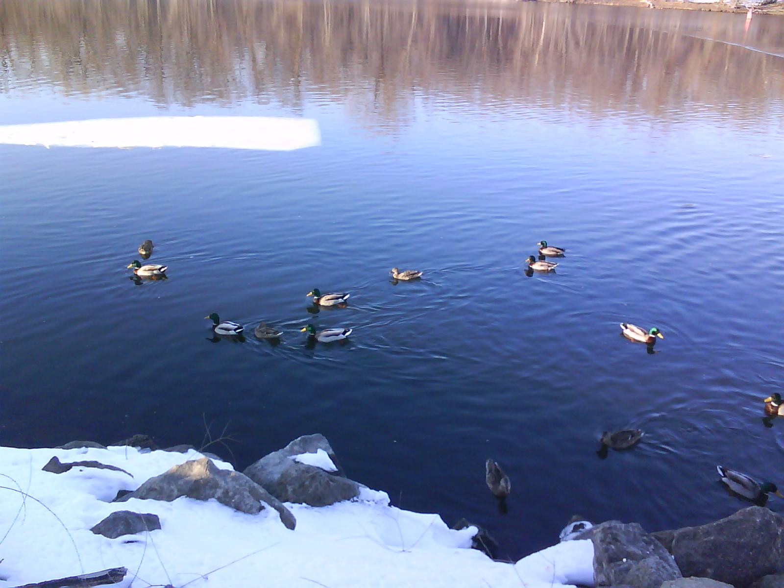 [duckies4]
