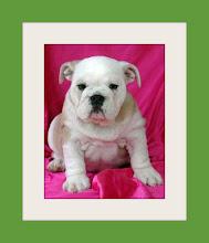 Baby Punkie Brewster
