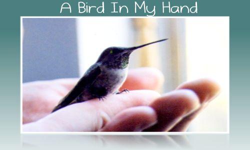 A Bird In My Hand