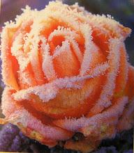 Frostig ros