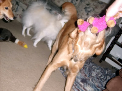 Eclipse playing tug with me with the pink stuffy. You can't see his face, just his chin and below, Teddy and Kira are visible in the background.
