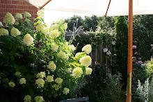 The Terrace Gardener