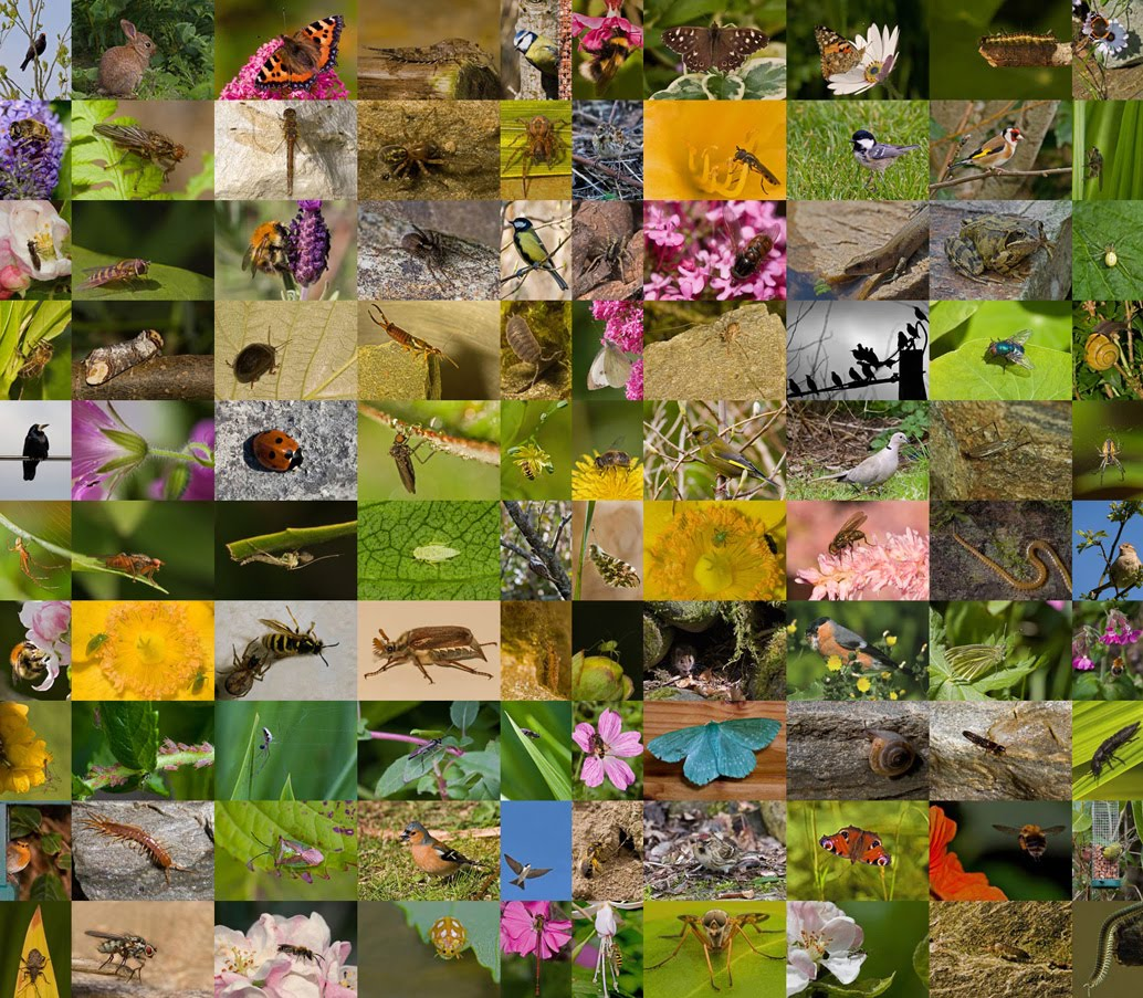 100 species of garden animals - Garden Animals