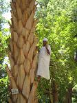 Sur le Palmier
