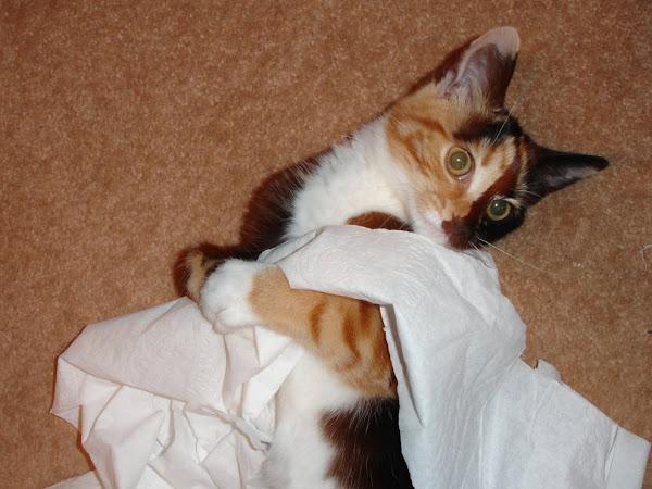 It wasn't me...