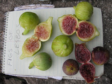 Heaven in a Fig