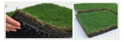 hay muchas maneras de tener uno desde implementar todo un sistema completo para que crezcan plantas de nuestro techo o bien poner jardineras