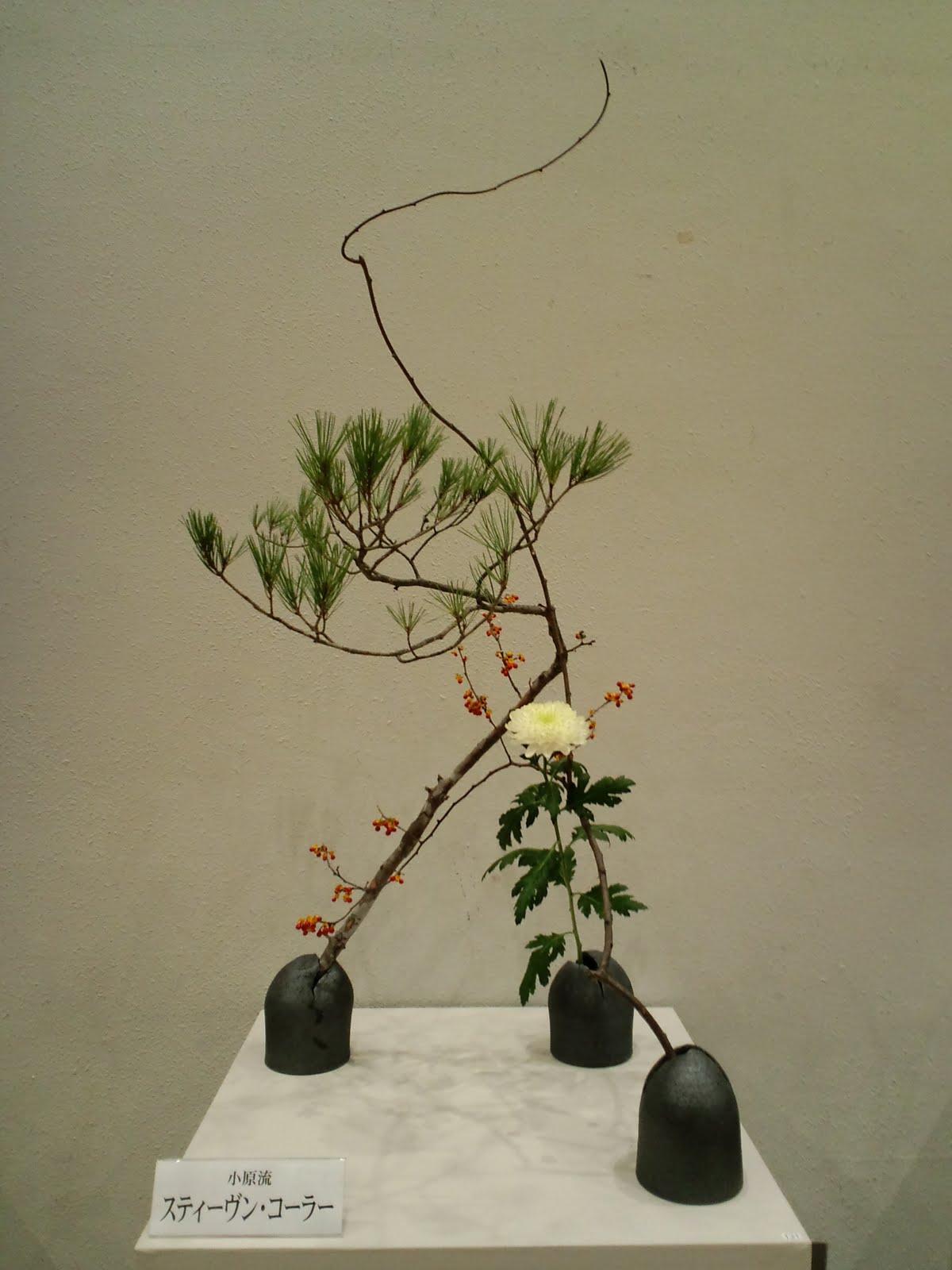 Hanamai Pine Bittersweet Chrysanthemum