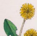 dandelion art quilt peek