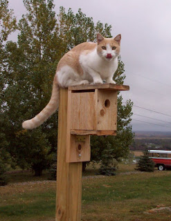 bad kitty on birdhouse