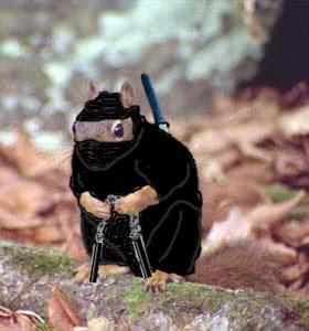squirrel-ninja.jpg