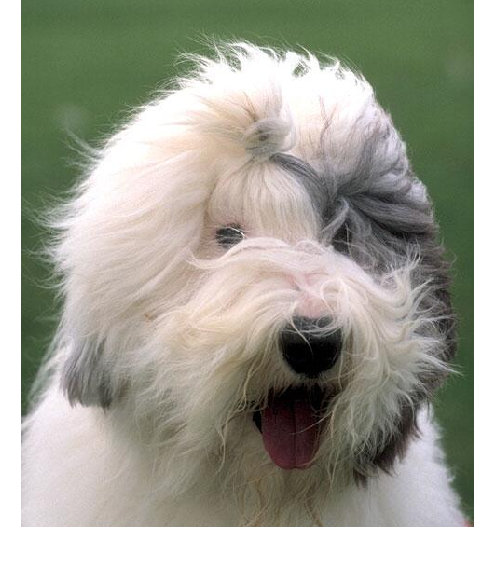 Animals Own World Cool Dog Hairstyles