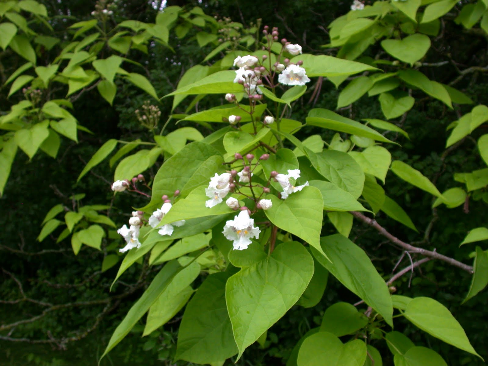 What Should I Be Doing With My Bees This Month Catalpa Trees