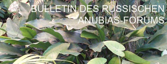 Bulletin des russischen Anubias-Forums