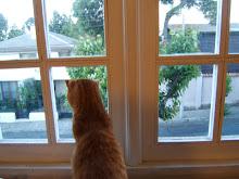 La gorda en la ventana ;B
