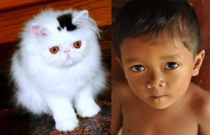 Doesn't <b>JayJay look</b> like this lolcat? - caption-this-picture%2Bcopy