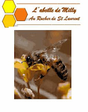 L'abeille de Milly au Rucher de St Laurent