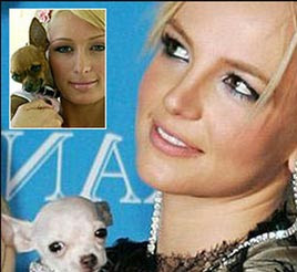 No Puppy Love For Britney Spears