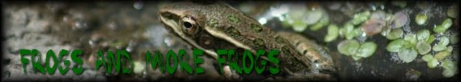 Frogs and More Frogs