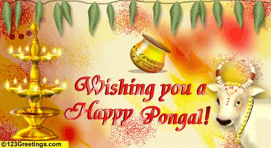 HAPPY SANKRANTHI & PONGAL 2011 GREETINGS, WISHES & MMS | MAA RESULTS
