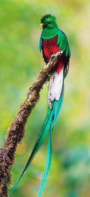 http://2.bp.blogspot.com/_4WRZ-q552RU/TTXqbvps1dI/AAAAAAAABkE/QVpwYGIpsYA/s1600/quetzal.jpg