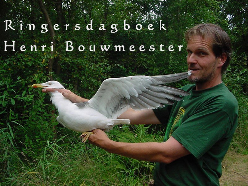 Ringersdagboek-Henri Bouwmeester