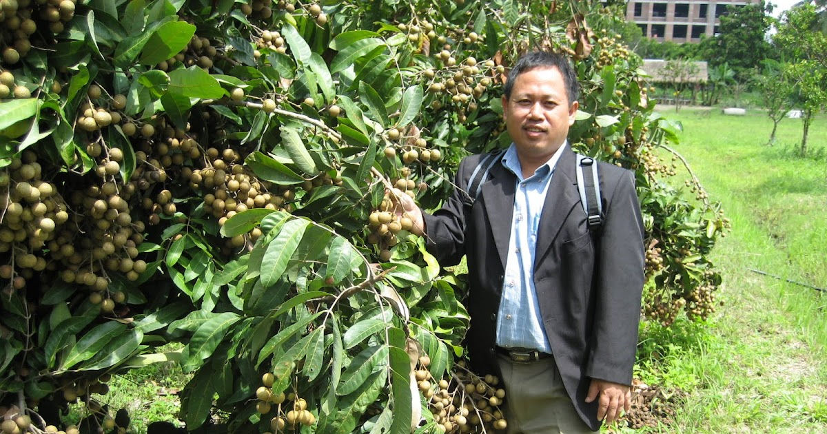 Thai Extension Lead : Anim agro technology longan in chiang mai