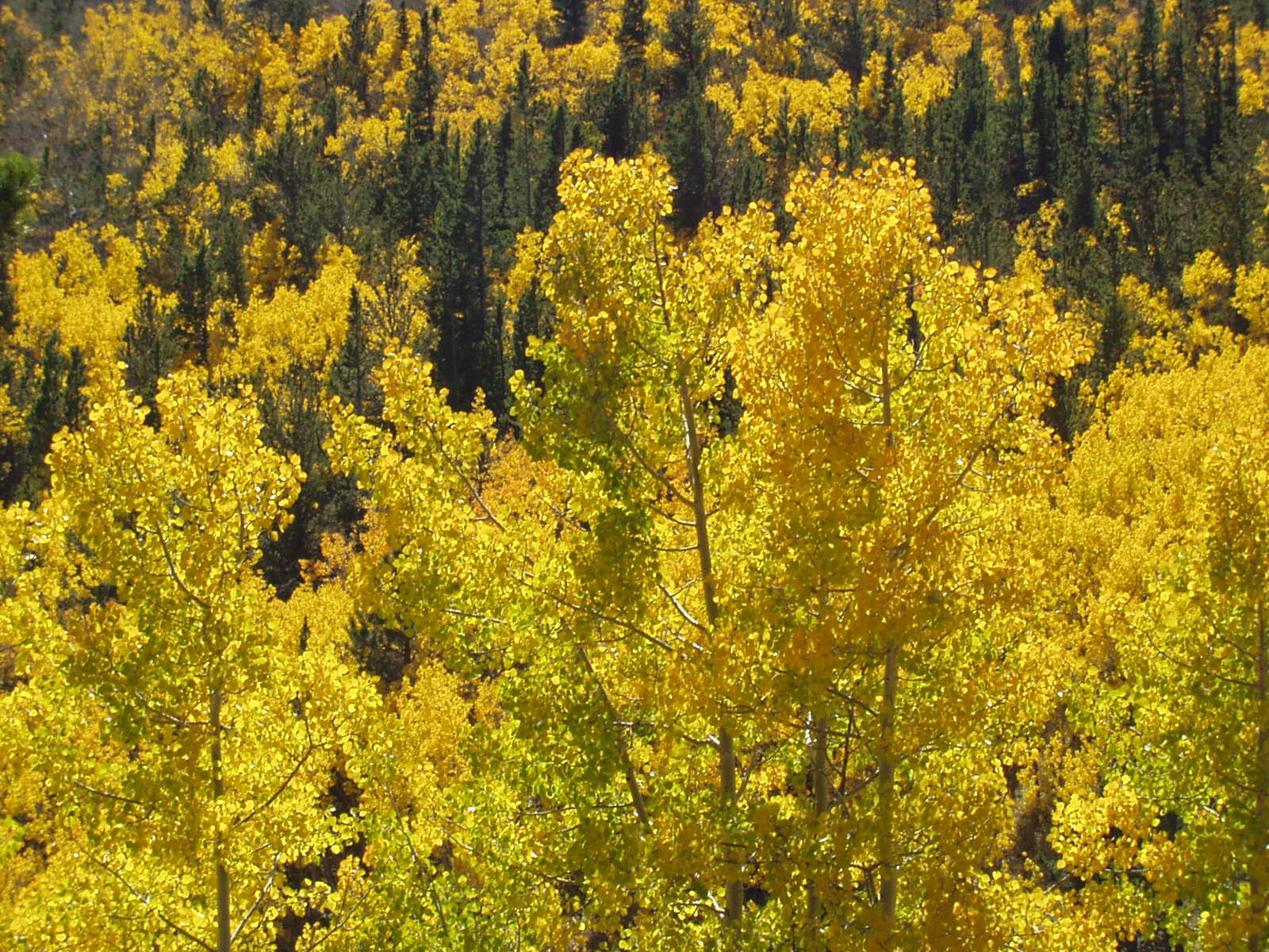 fall colors, peak to peak scenic byway