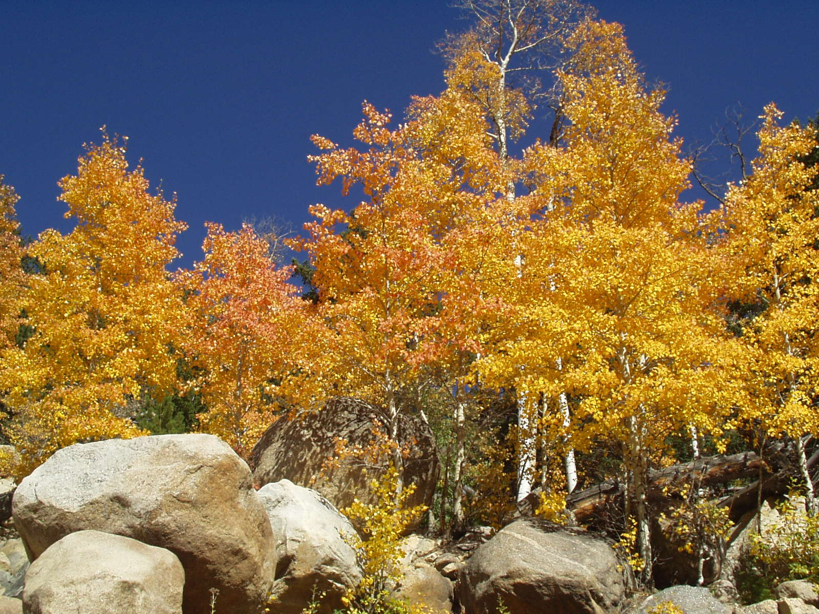 fall colors, alluvial fan, rocky mountain national park