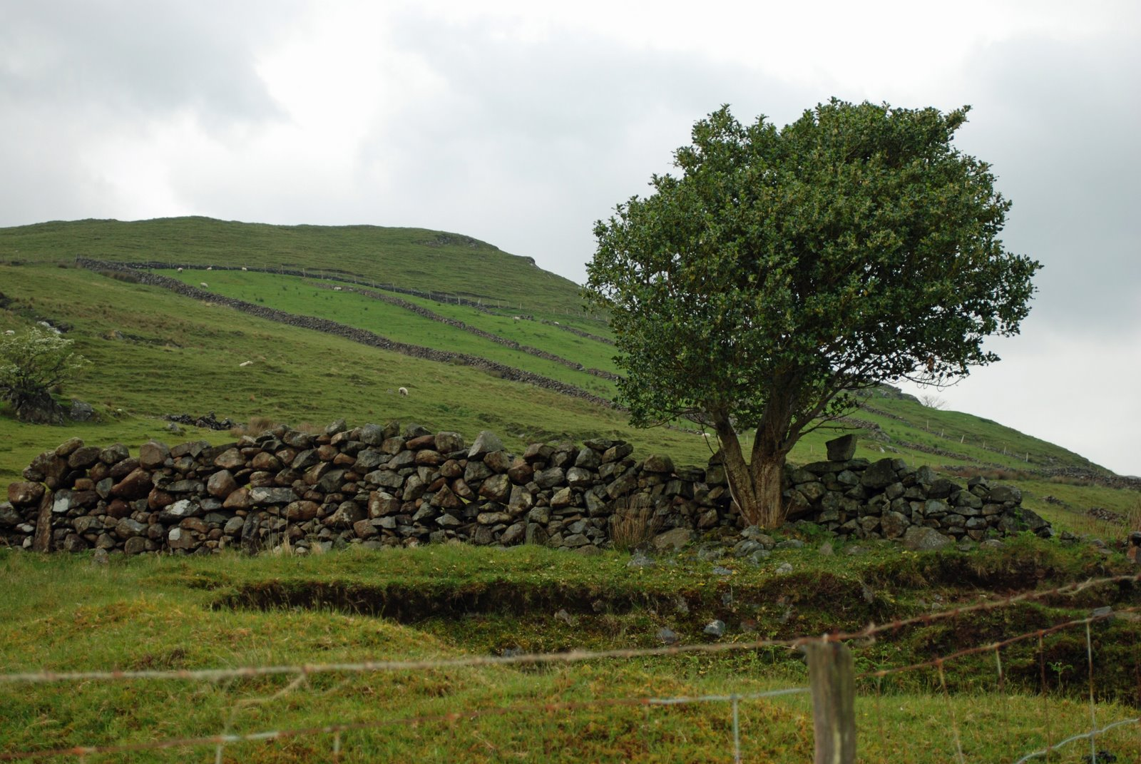 stone walls, Partry Mountains, County Mayo