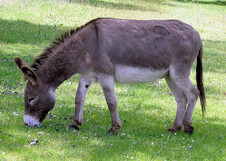 my life sucks donkey ass