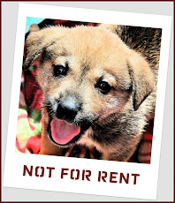 We Don't  Rent Puppies