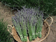 Lavender Bunches Available !!