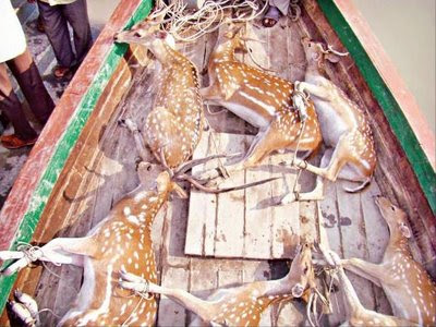 7 wild deer rescued by the police of bangladesh