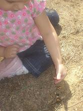Alimentando formigas...