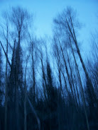 Looming Trees by BadLilGoth