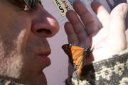 Besando a la Mariposa