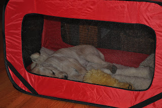 a picture of bob in his pop-up crate. Its a view from the side, you can see part of mr. duck through the mesh window.