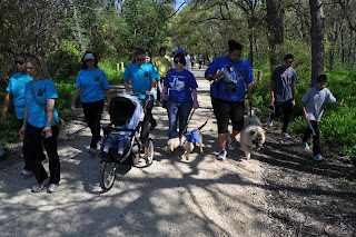 Bob and I walking in a group of people, Tieg and Laz are next to us on our left and there is a group on our right, the lady next to me has a stroller and Bob is attempting to get to it and sniff. I have my puppy raiser shirt on which is blue and a long sleeved pink shirt under it