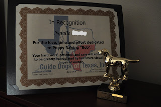 A picture of my certificate with my little trophy in front of it. The certificate says In Recognition of Natalie Last name lol. For the love, time and effort dedicated to puppy raising