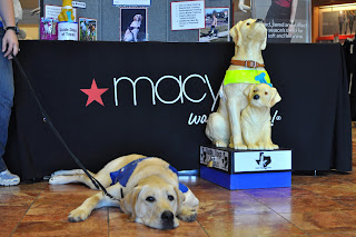 Image of Bob laying in front of a table with a macy's table cloth on it, he is laying next to a big plastic bank shaped like a yellow lab guide with a yellow lab puppy in front of it.