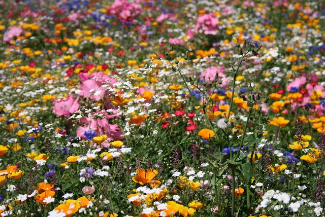 des fleurs à en être malade, mais c'est pas possible tellement c'est toujours beau....