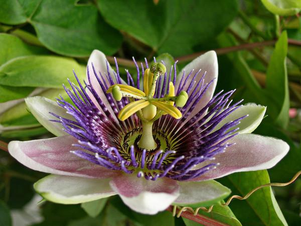 Цікаві рослини