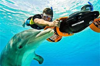 Atlantis Dolphin Interaction